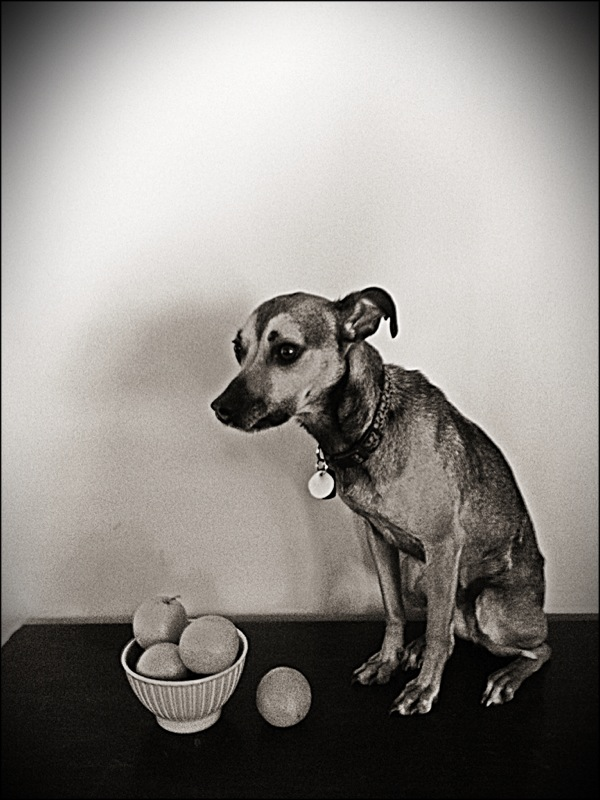 Dog & Oranges